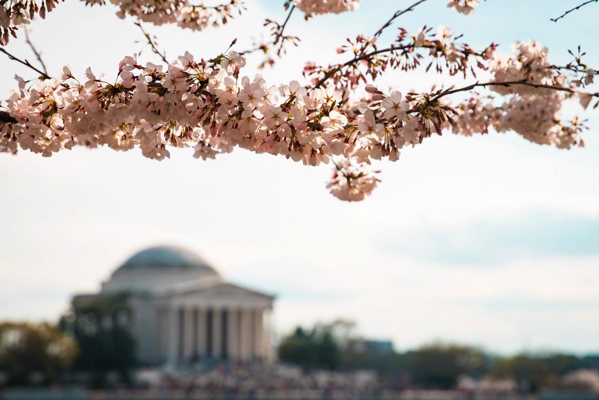 桜がみえる風景