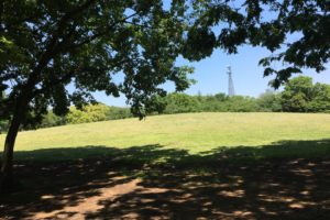 府中の森公園芝生