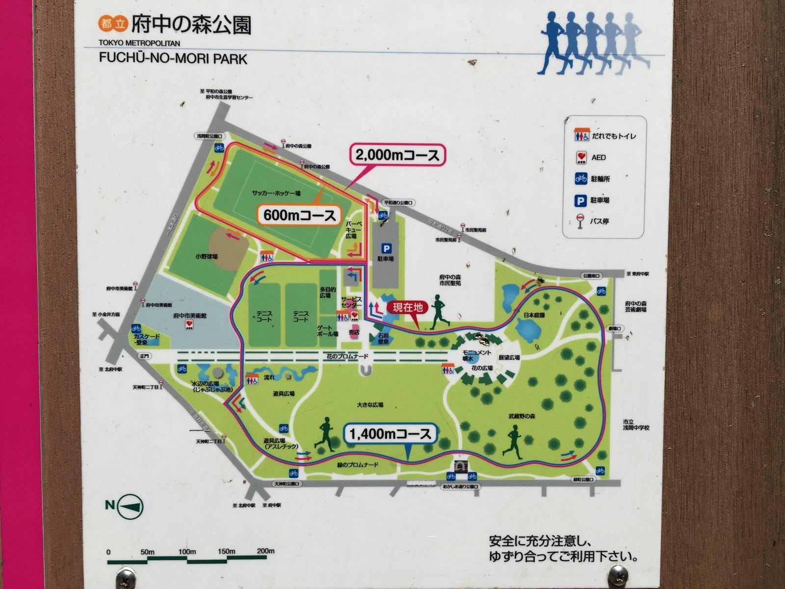 府中の森公園ランニングコース