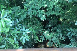 緑いっぱい涼しげなランニングコースの一角で